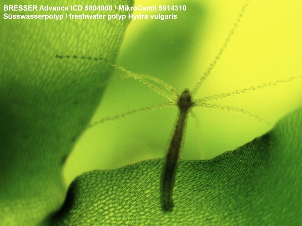 Bresser mikrocamii 3.1mp usb 3.0 mikroskopkamera bresser